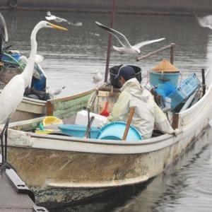 浜名湖の鳥と漁師さん 鳥のトリ分