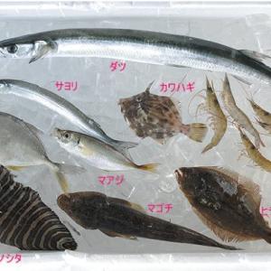浜名湖の10月半ばを泳ぐ魚たち 夢の浜名湖バラエティセット