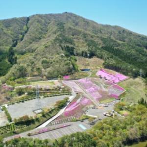 ジュピアランドひらたの芝桜2020 【空撮】