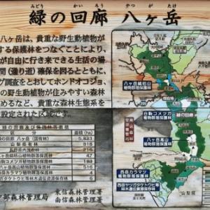 北八ヶ岳(麦草峠~にゅう編)