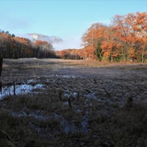 雪待ちの矢ノ原湿原
