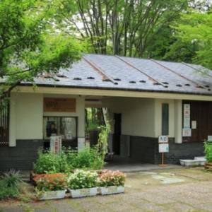 福島市民家園のレンゲショウマ