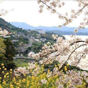 長与町岡郷南部地区 桜満開 (^O^)/~~♪