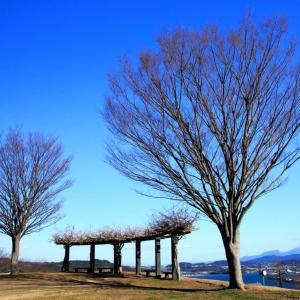 のぞみ公園(諫早市多良見) 桜満開!