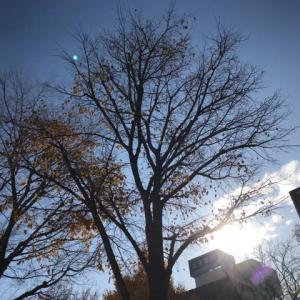 人間関係・樹木