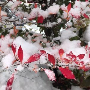 ありがとう・雪景色。