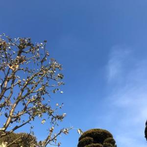 伝える・青空と樹木
