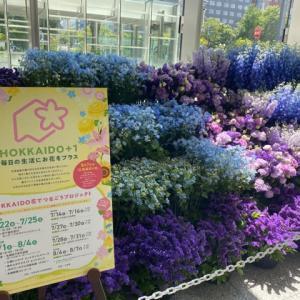大通ビッセ1階に・北海道の花々。