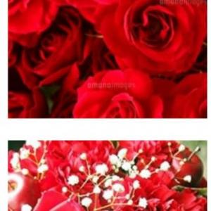 人は心を求めて・薔薇の花。