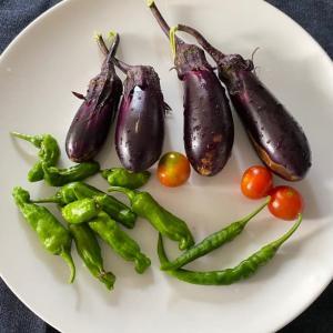 夏野菜・絵手紙