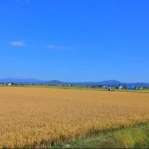 北海道米が美味しい