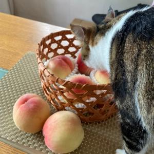 むつめ編みで、果物かご