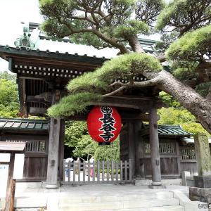 鎌倉長谷寺の紫陽花~2020年~