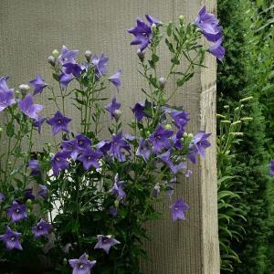 エントランスの花