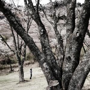 屛風岩公苑