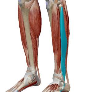 足首の痛み(外側)