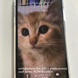 iPhone11へ即機種変更