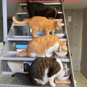 猫達の朝食風景!