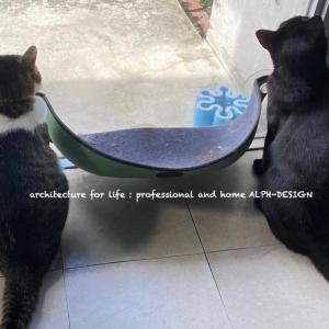 モノトーンな猫達