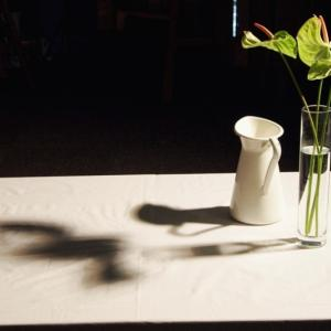 影の色はグレーじゃない《改訂・再掲》- Shadow's color is not gray -