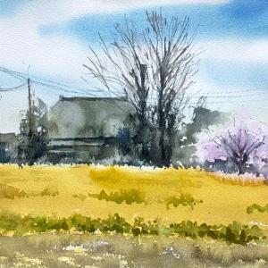スケッチデー《菜の花と桜》-Sketch Day《Cherry&Rape blossoms》-