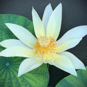 神々しい花