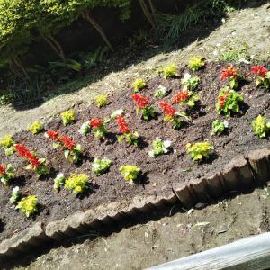 町内会の花植え