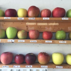 リンゴ ディスプレー