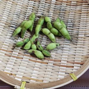 あの甘みは、採れたて故か。。。枝豆編