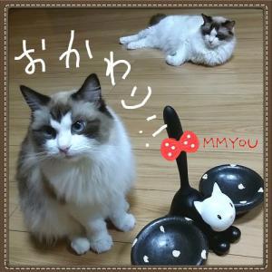 術後の食欲◆【 体重測定 】 6歳1ヶ月ラグドール猫姉妹 ♀