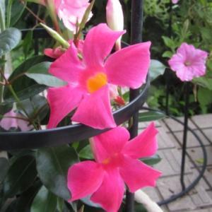 写真が取り込めない・・・&私の菜園、何と何とみすぼらしいことよ・・・