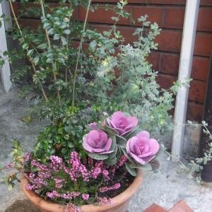やっとメインの花を植えました