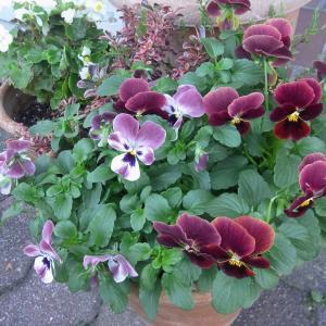 半日陰で育てている植物 11月~