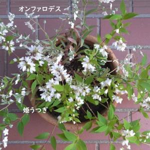 日陰・半日陰で育てている植物 4月