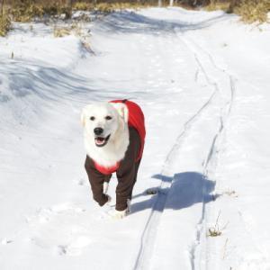 雪遊びデビュー②