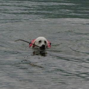 泳ぎが達者