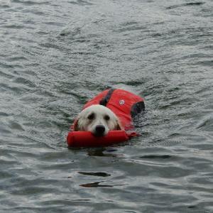 泳ぐルビーをどうぞ