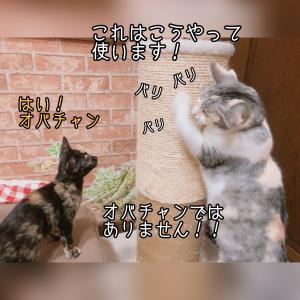 乙女ちゃん 初盆