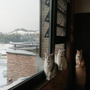 雪の日の成人式式典
