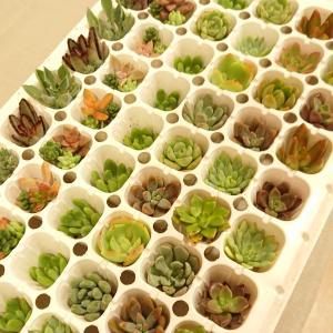 多肉植物の寄せ植え教室in住まいの展示場家の森