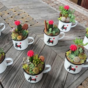 多肉植物とサボテンのホーローカップ寄せ植えWORKSHOP
