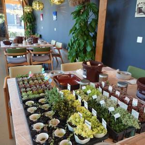 多肉植物とセダムのセメントリース