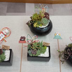 多肉植物のお正月寄せ植え体験会