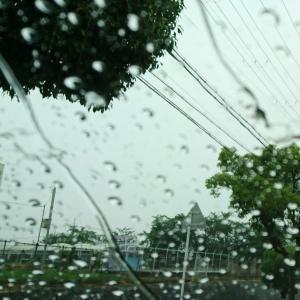 雨…蒸し暑い一日