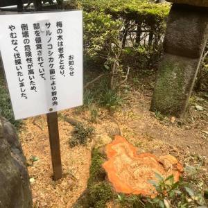 【ご報告】梅と桜の伐採について 木余り 性翁寺(東京・足立区)