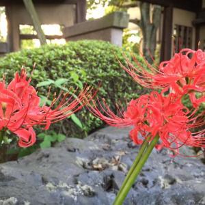 秋のお彼岸、始まります。 9月19日~25日(東京足立・木余り 性翁寺)