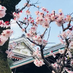 春のお彼岸、始まります。3月17日~23日(東京足立・木余り 性翁寺)
