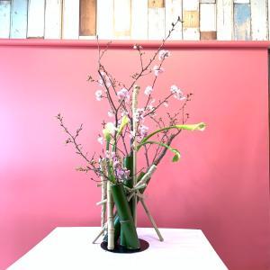 桜。さくら。櫻。