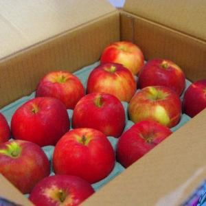 りんごダイエット 初日