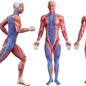 「筋膜」の学びを。